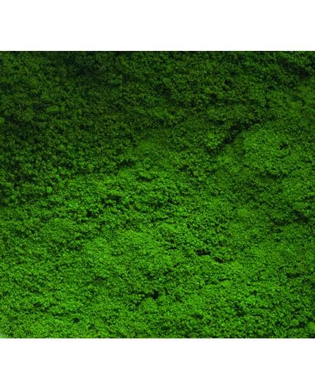 Barwnik pyłkowy matowy FC Olive Tree
